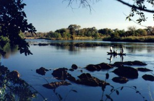 Rush hour on the Zambezi River